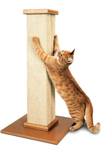 Cat Using A Scratching Post