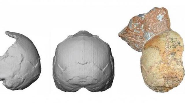 Κρανίο 210.000 ετών που βρέθηκε στην Ελλάδα αποτελεί το αρχαιότερο δείγμα homo sapiens