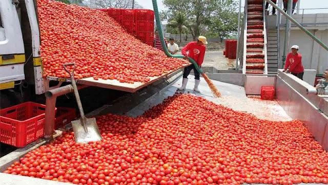 Mesin Giling Tomat ( Tomato Juice Extractor ) Ekonomis Produksi Dalam Negeri