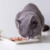 Różnorodność mięs w kociej diecie – jak to z nią jest?