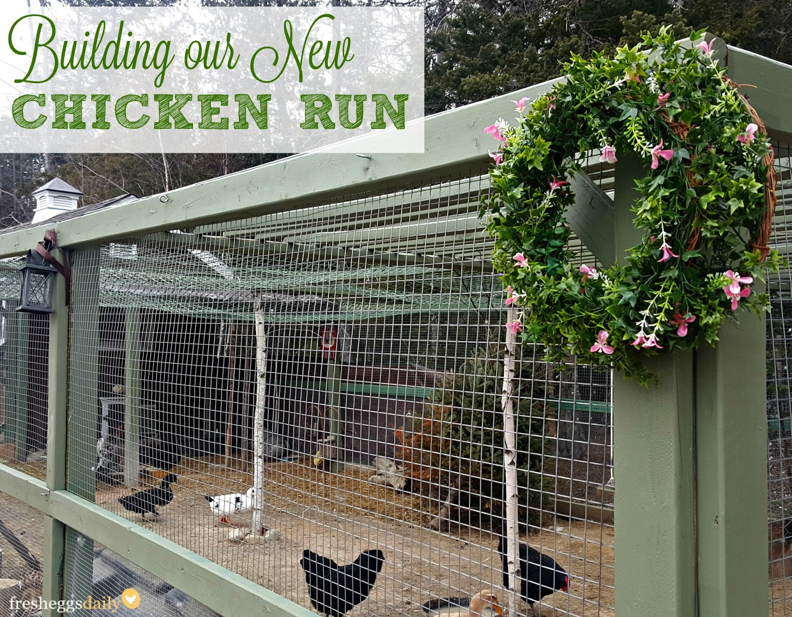 Building Plans For Chicken Run