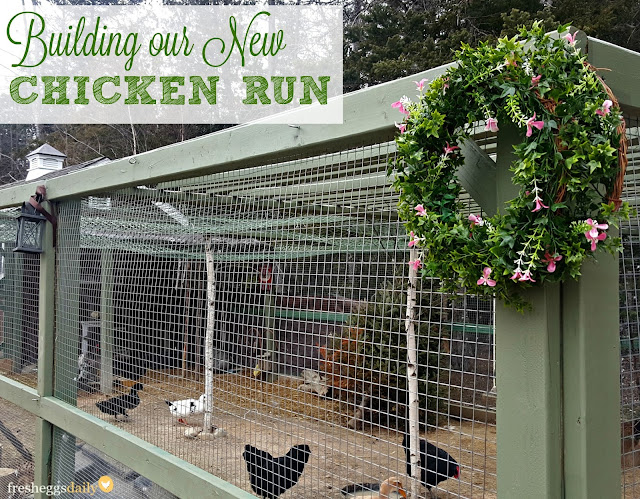 Building A Predator Proof Chicken Run Fresh Eggs Daily 174