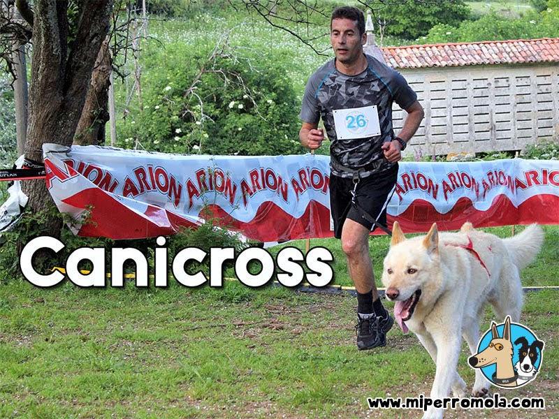 Can de Palleiro corriendo Canicross