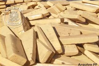 Operação Sapucaia combate grupo criminoso especializado em tráfico de droga