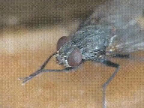 Intentó atrapar a una mosca con su matamoscas eléctrico y terminó explotando su casa