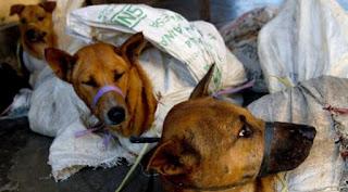 32 warga simalungun keracunan daging anjing