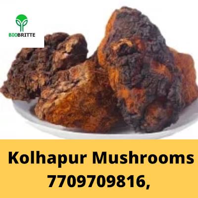 Buy Chaga Mushrooms Online
