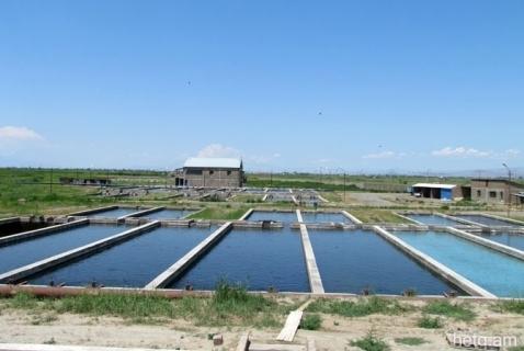 Las piscifactorías causan la floración del lago Sevan