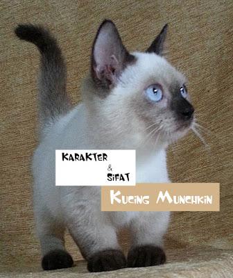 Pasaran Kucing Munchkin