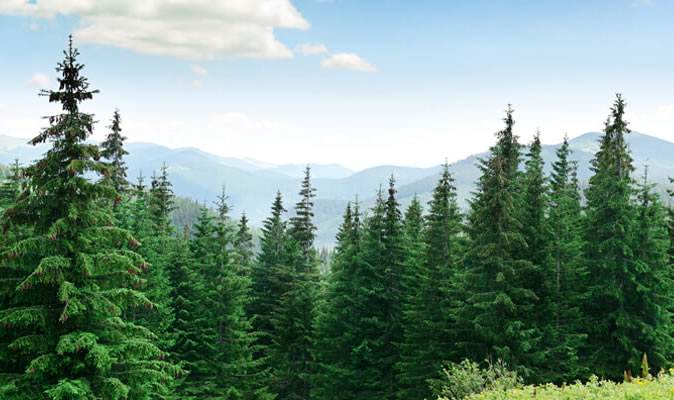 Boreal Coniferous Forest