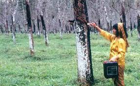 Peluang Usaha Pertanian Modern Yang Menjanjikan Bisnis Terlaris