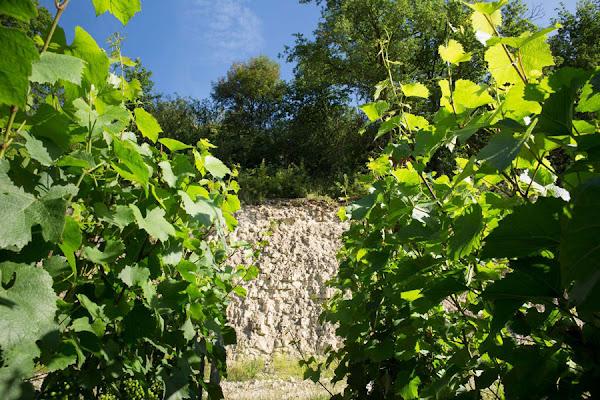 Chablis soil substratum