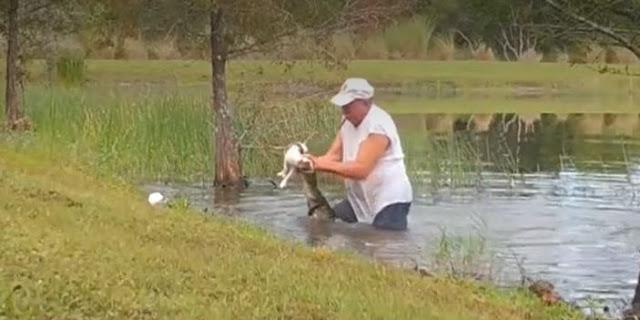 Pria ini Menarik Buaya Keluar Dari Air Dan Membuka Rahangnya Untuk Menyelamatkan Anjingnya