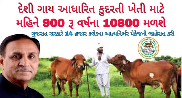 દેશી ગાયને રૂ.900 લેખે મળશે 900 per month to the farmer for natural farming based on native cows