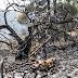 Κρανίου τόπος οι περιοχές που κάηκαν στην Εύβοια - Νέο πύρινο μέτωπο μεταξύ Πλατάνα και Μακρυμάλλης (Photos)