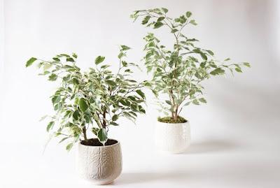 Tukang Taman Surabaya tanaman Hias Indoor Dan Outdoor