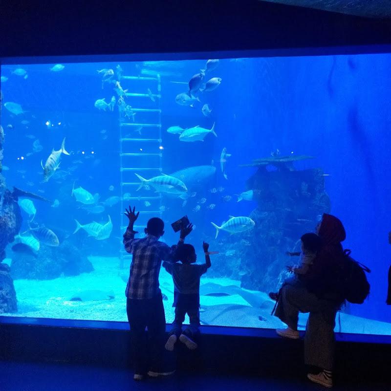 Jakarta Aquarium Liburan Bawah Laut Seru A La Keluarga Mister Pelaut