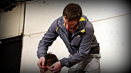 CK-Splash Back repelente de orina para perros y orina
