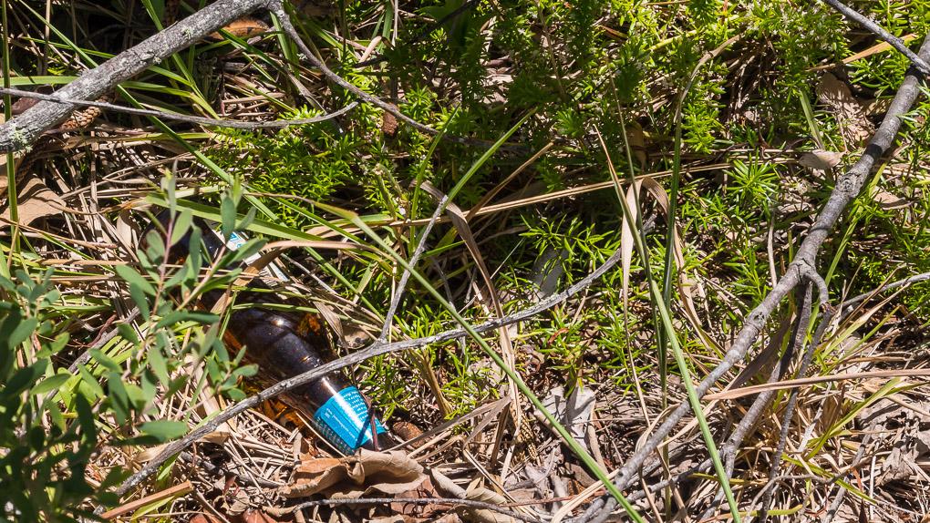 Asparagus aethiopicus Asparagus Fern threatening native vegetation - Australia