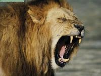 Resultado de imagen de fotos de leones una persona metiendo la cabeza dentro de la boca del leon