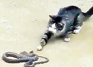 Arti Mimpi Melihat Kucing Bermain Dengan Ular