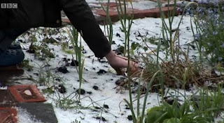 Hailstones on the garden