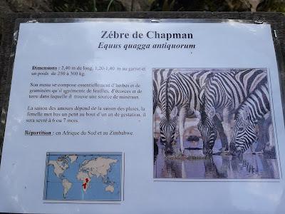panneau-de-presentation-du-zebre-de-chapman