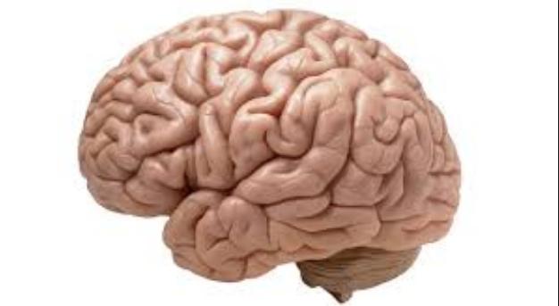 Fakta Unik Otak