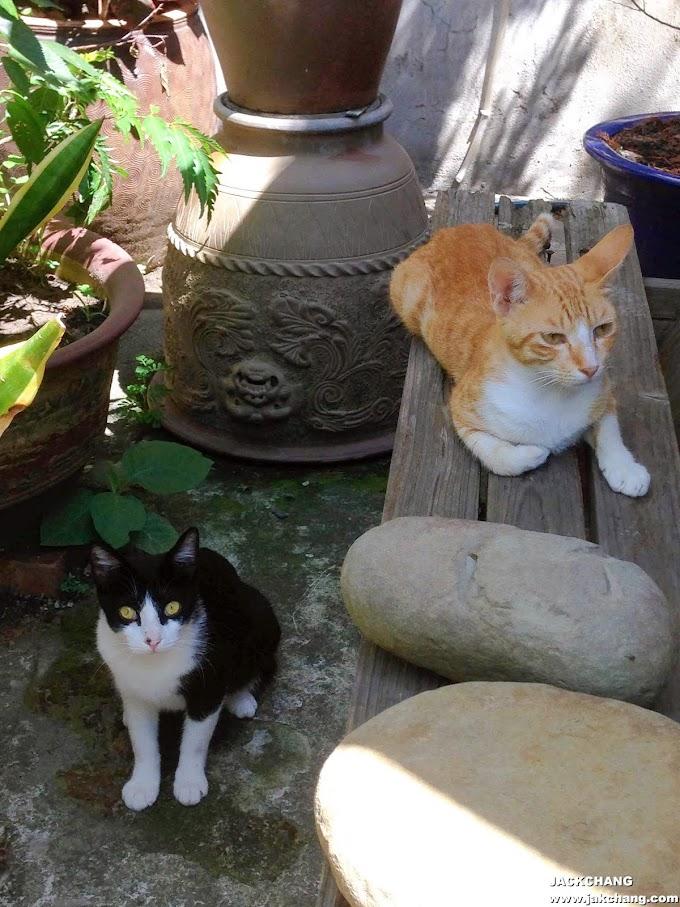 悠閒的貓咪人生EP02-自由自在奔跑在老家小花園