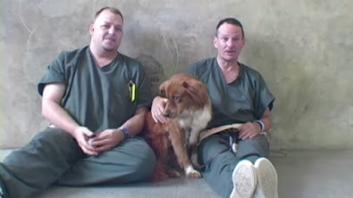 Presidiários cuidam de cães e suas vidas são transformadas