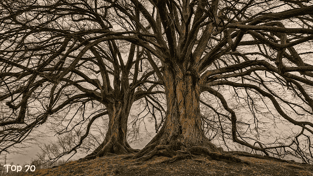 Short quotes about trees