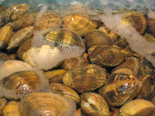 Cancer in Clams Spread by a Cell