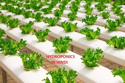 hydroponics in hindi, hydroponics farming
