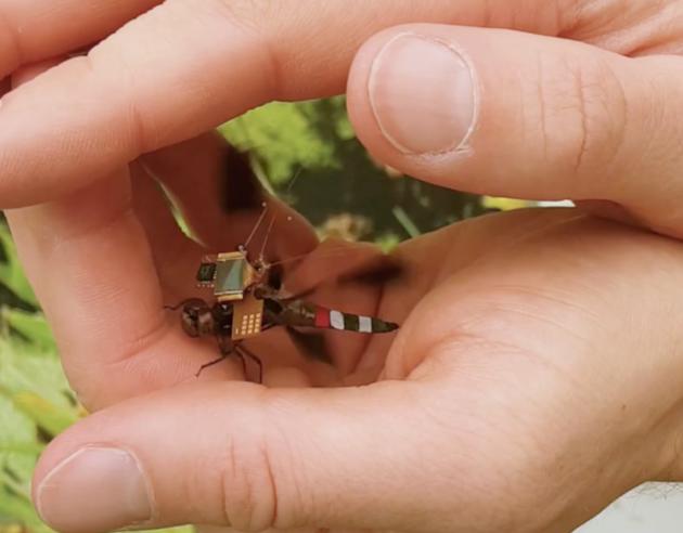 微型活體無人機 - DragonflEye