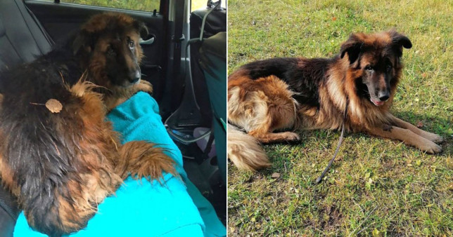 Dog Digs Himself Out Of The Grave After Buried Alive By His Owners