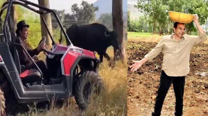 खाली समय में गाड़ी पर सवार होकर खेत में गाय-भैंस चरा रहे हैं धर्मेंद्र, देखें वीडियो