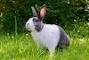ससा विषयी माहिती - Rabbit information in marathi
