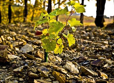 ponca terreno collio vigne