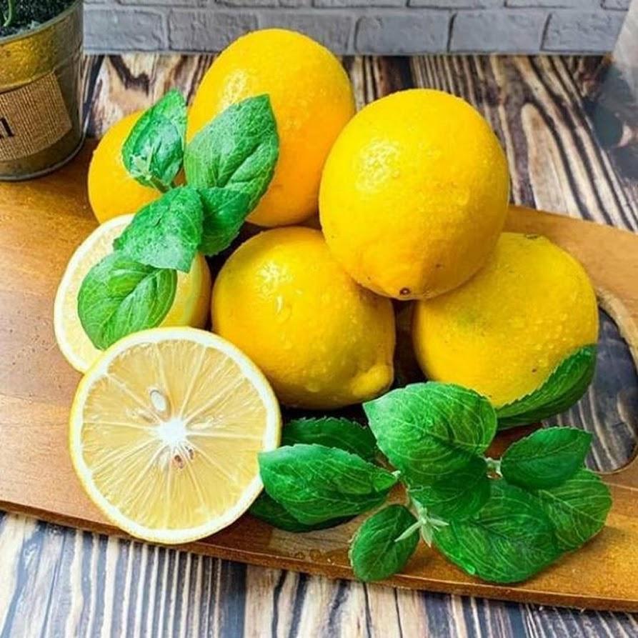 Bibit jeruk lemon California berbuah jeruk lemon Sulawesi Selatan