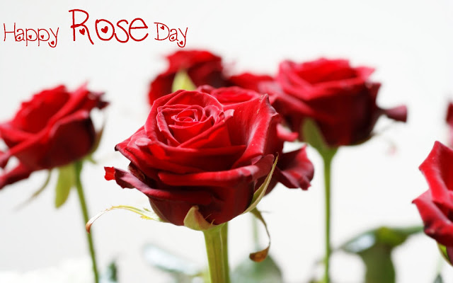 rose day images with messages