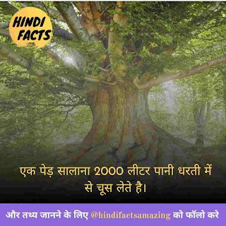 about tree in hindi