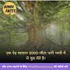 About Tree in Hindi - पेड़ो से जुडी जानकारी और 26 रोचक तथ्य
