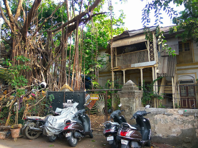 old house, architecture, vintage, bandra, mumbai, incredible india, banyan tree, street, streetphoto,