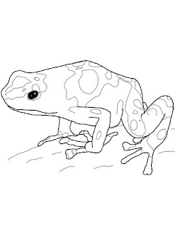 Dyeing Dart Frog Coloring Pages For Print