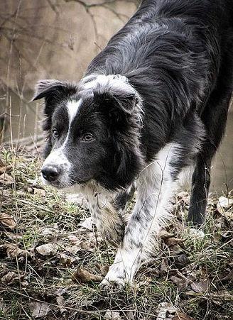Perro en el campo.