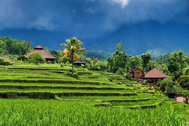 ubud, bali, rice field in ubud, tourism, bali tourism