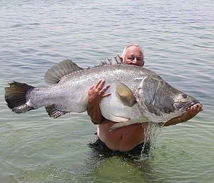 Bigfish.Com