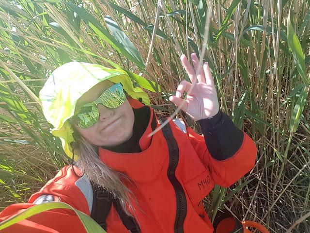Pelastautumispukuun pukeutunut luontokartoittaja näyttää OK-merkkiä tiheässä järviruovikossa vesikiikarin kanssa