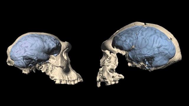 Οι εγκέφαλοι των προγόνων μας έμειναν εκπληκτικά σαν των πιθήκων μέχρι σχετικά πρόσφατα