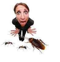 как травить тараканов в доме